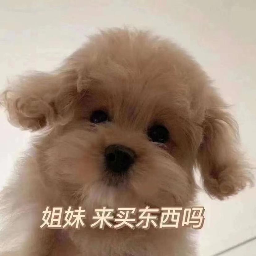 重庆维才是举网络科技有限公司
